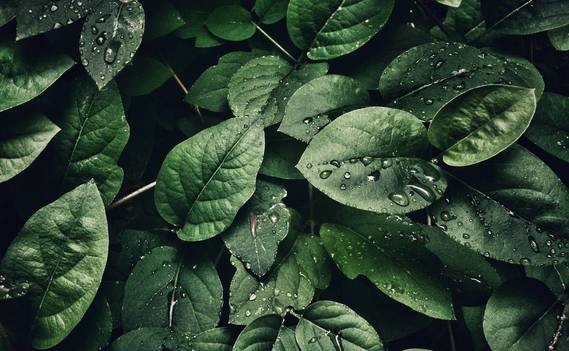 Normal_close-up-photography-of-leaves-with-droplets-807598