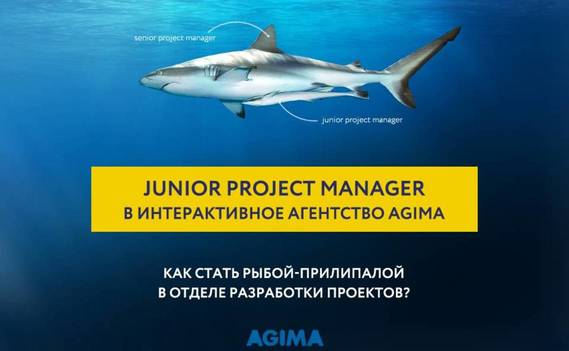 Normal_junior_project_manager